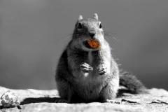 Squirrel Art Color Splash