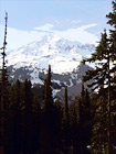 Mt. Rainier & Tall Trees digital painting