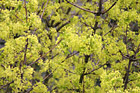 Close Up of a Tree in Bloom photo thumbnail