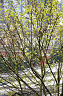 Tree in Blossom With City in Background photo thumbnail