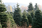 Christmas Trees Outside photo thumbnail
