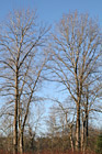 Seasonal Trees photo thumbnail