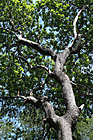 Interesting Tree Branches photo thumbnail
