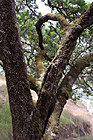 Mossy Tree photo thumbnail