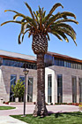 Palm Tree on Santa Clara Campus photo thumbnail