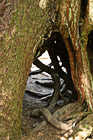 Hole in Tree Trunk photo thumbnail