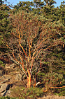 Tree on side of Cliff photo thumbnail
