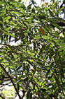 Tree Leaves photo thumbnail