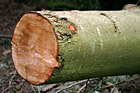 Close up of a Log photo thumbnail