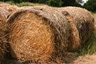 Bundles of Hay photo thumbnail
