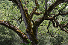 Mossy Tree Close Up photo thumbnail