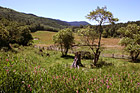 Farmland in Summer photo thumbnail