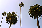 Palm Trees & Blue Sky photo thumbnail