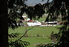 Farm Through Trees photo thumbnail