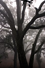 Spooky Trees photo thumbnail