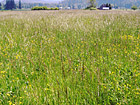 Tall Grass Field photo thumbnail